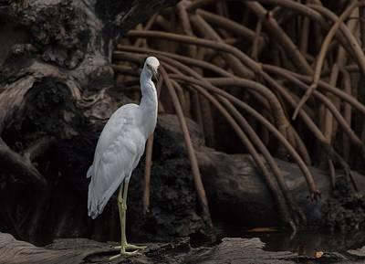 J N Ding Darling National Wildlife Refuge Photograph - Heron In Disguise by Debra Larabee