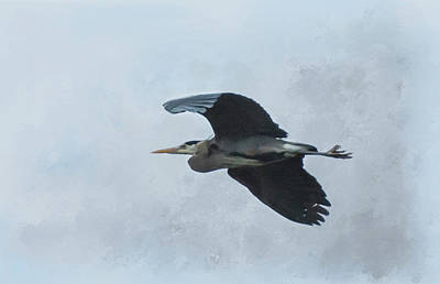 Photograph - Heron In Flight by Marilyn Wilson