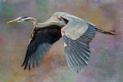 Photograph - Heron In Flight by Suzanne Stout
