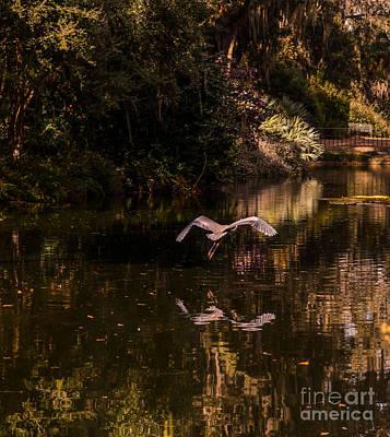 Great Blue Heron Photograph - Heron In Flight by Zina Stromberg