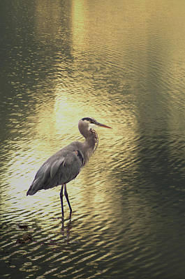 Photograph - Heron In Golden by Marilyn Wilson