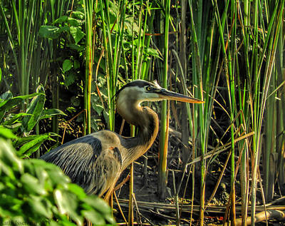 Photograph - Heron In Profile by Kathi Isserman