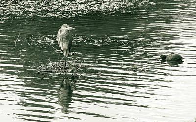 Photograph - Heron In Public Park A by Jacek Wojnarowski