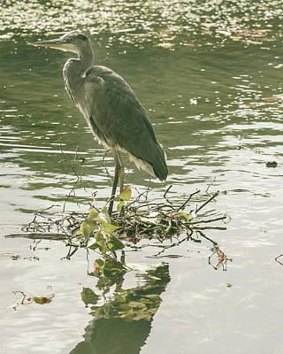 Photograph - Heron In Public Park D by Jacek Wojnarowski