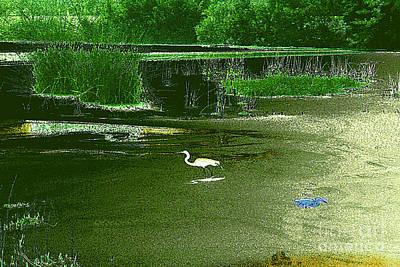 Photograph - Heron In Swamp At Dawn by Merton Allen