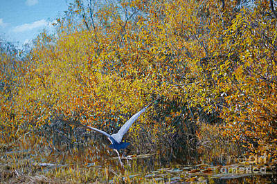 Painting - Heron In The Florida Everglades by Judy Kay