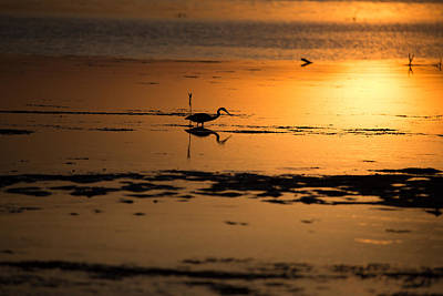 Wetlands Photograph - Heron In The Gold by J Darrell Hutto