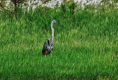 Heron In The Grasses Original