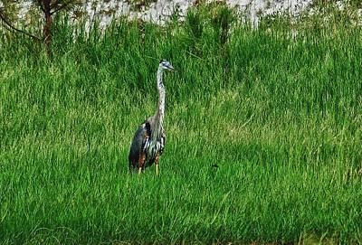 Heron In The Grasses Original by Michael Thomas