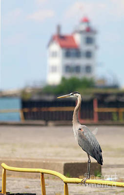 Photograph - Heron In The Harbor by Debbie Parker