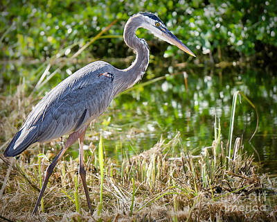 Photograph - Heron In The Rough by Judy Kay