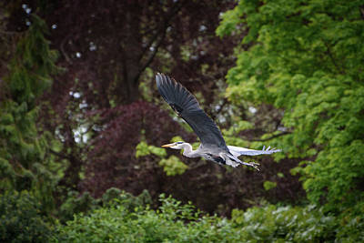 Photograph - Heron In The Woods by Keith Boone