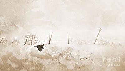 Sandra Silva Photograph - Heron In Winter by Sandra Silva