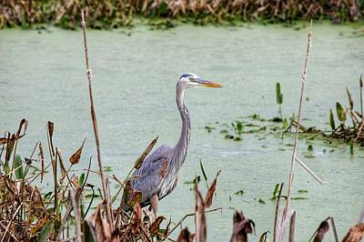 Photograph - Heron  by Joseph Caban