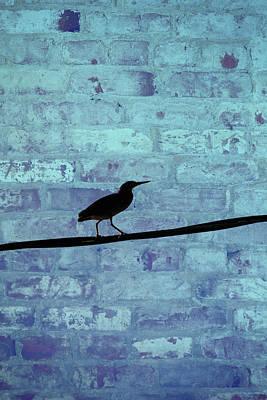Photograph - Heron by Karol Livote