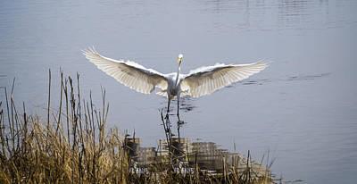 Traditional Bells - Heron Landing by David Kay