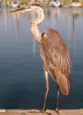Photograph - Heron  by Leticia Latocki