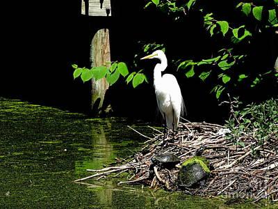 Photograph - Heron Majesty #3 by Ed Weidman