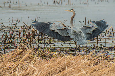 Photograph - Heron  by Mike Hainstock
