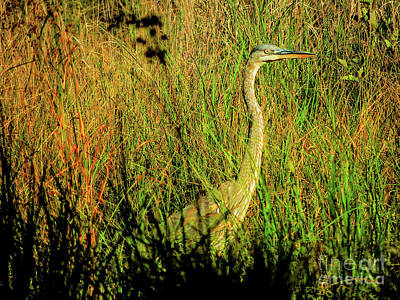 Photograph - Heron by Mim White