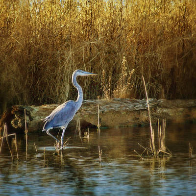 Photograph - Heron by Nikolyn McDonald