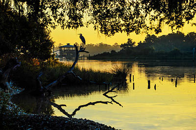 Photograph - Heron On A Stick Part 2 by Michael Thomas