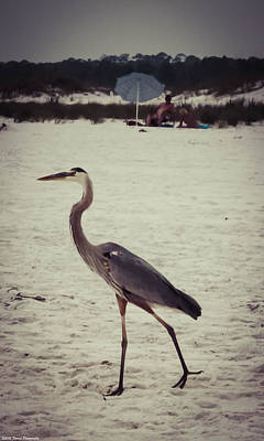 Photograph - Heron On Beach by Debra Forand