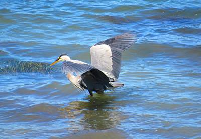 Photograph - Heron On Bellingham Bay by Karen Molenaar Terrell