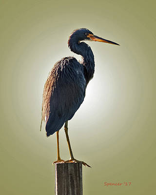 Photograph - Heron On Post by T Guy Spencer