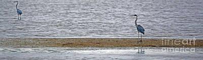 Photograph - Heron On Quivira Sandbar by Betty Morgan