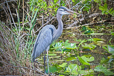 Photograph - Heron On River's Edge by Judy Kay