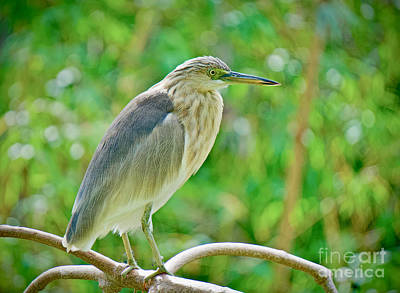 Photograph - Heron On The Edge by Judy Kay