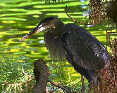 Photograph - Heron On The Green by Dee Dee Whittle