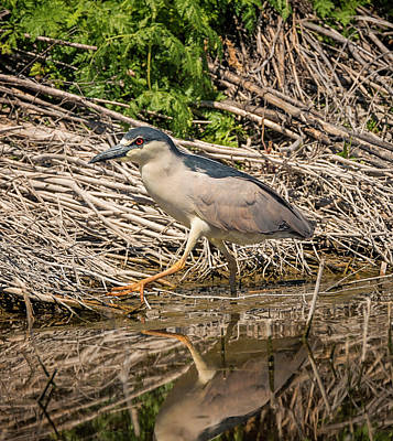 Photograph - Heron On The Hunt by Loree Johnson