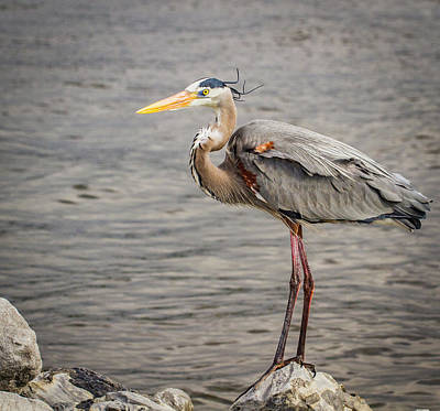 Photograph - Heron On The Lookout by Jean Noren