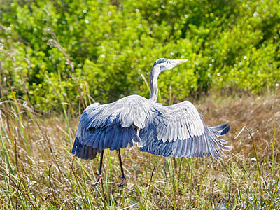 Photograph - Heron On The Rise by Judy Kay