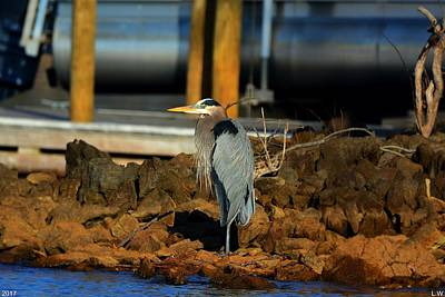 Heron On The Rocks 2 Art Print