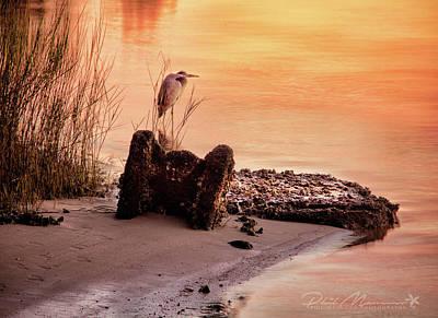 Photograph - Heron On The Rocks by Phil Mancuso
