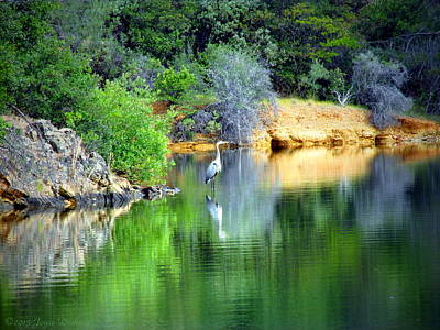 Photograph - Heron On Whiskey Creek by Joyce Dickens