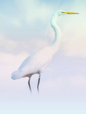 Heron Or Egret Stance Art Print by Joseph Hollingsworth