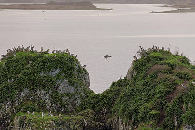 Photograph - Heron Party On The Rock by Loree Johnson
