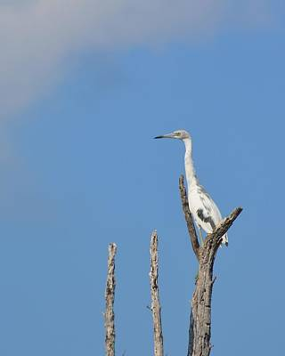 Photograph - Heron Perch by JAMART Photography