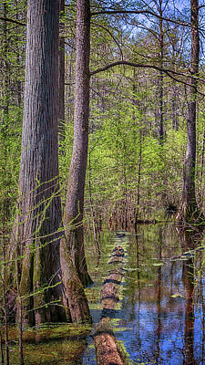 Photograph - Heron Pond Swamp 2 by Susan Rissi Tregoning