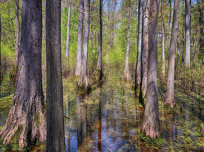 Photograph - Heron Pond Swamp by Susan Rissi Tregoning