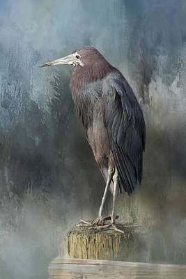Heron Profile Art Print by Kim Hojnacki