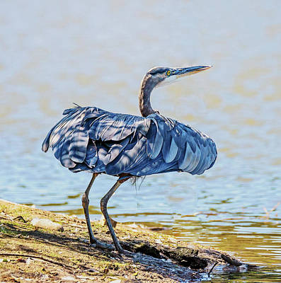 Photograph - Heron Puffing by Jerry Cahill