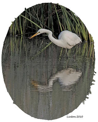 Egret Digital Art - Heron Reflection by Larry Linton