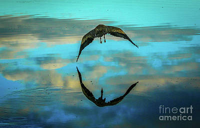 Photograph - Heron Reflection by Tom Claud