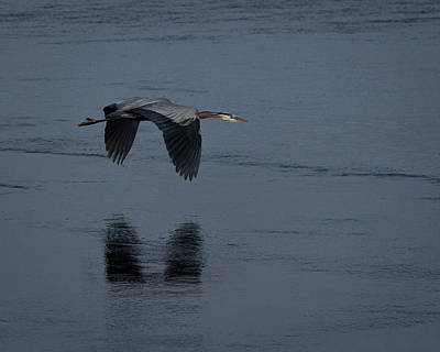 Photograph - Heron Reflections by Ernie Echols