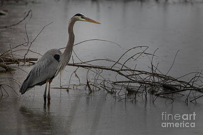 Photograph - Heron by Reva Dow
